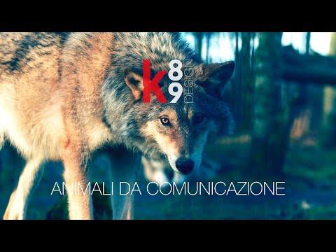 K89 Design - Animali da comunicazione