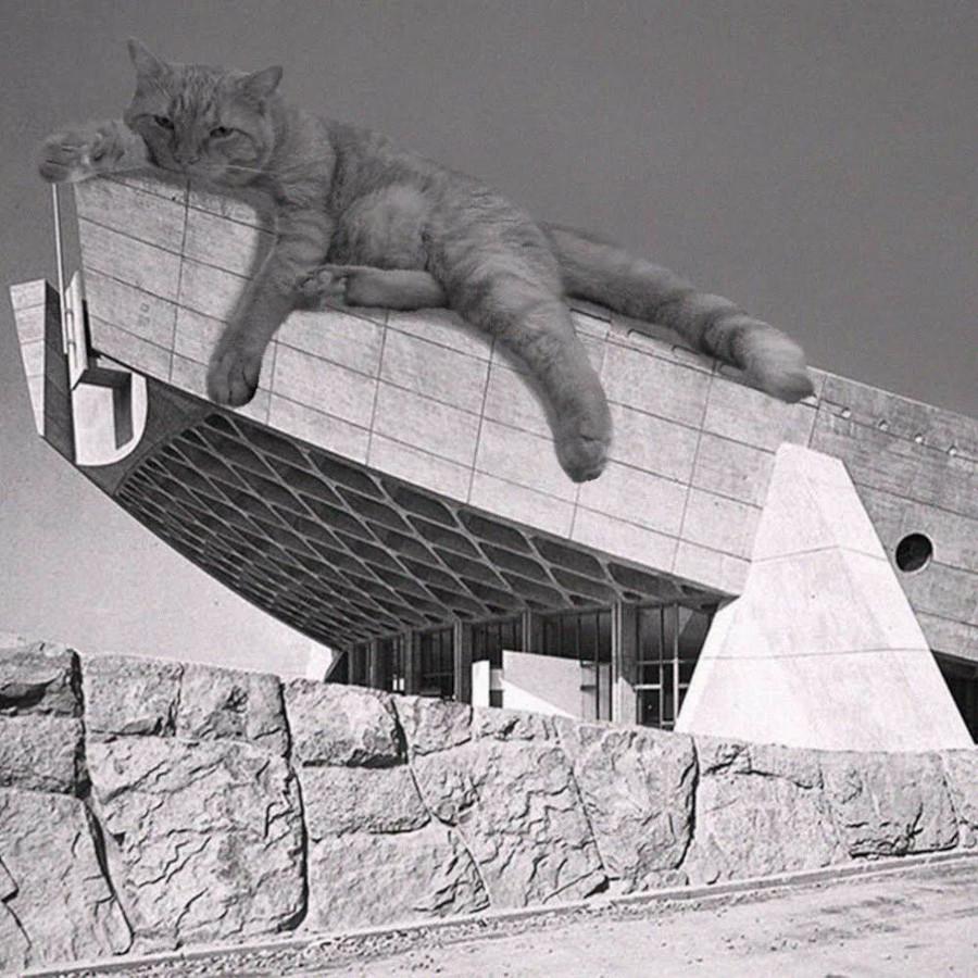 estetica gatti nel social instagram