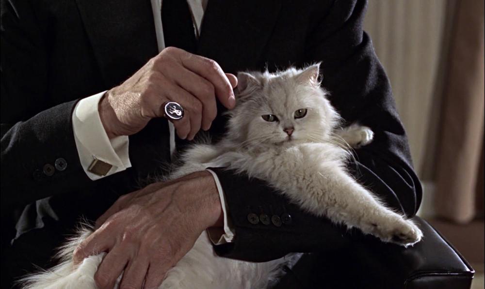 gatto ,nel cinema