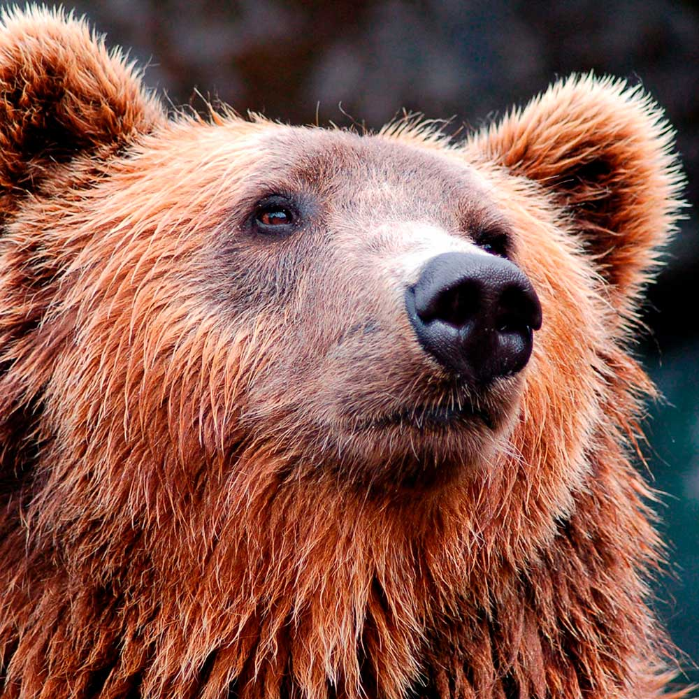 k89-design-agenzia-di-comunicazione-padova-orso